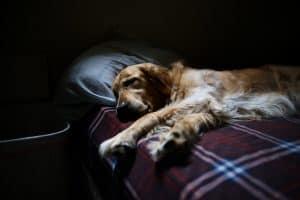 dog sleep bed