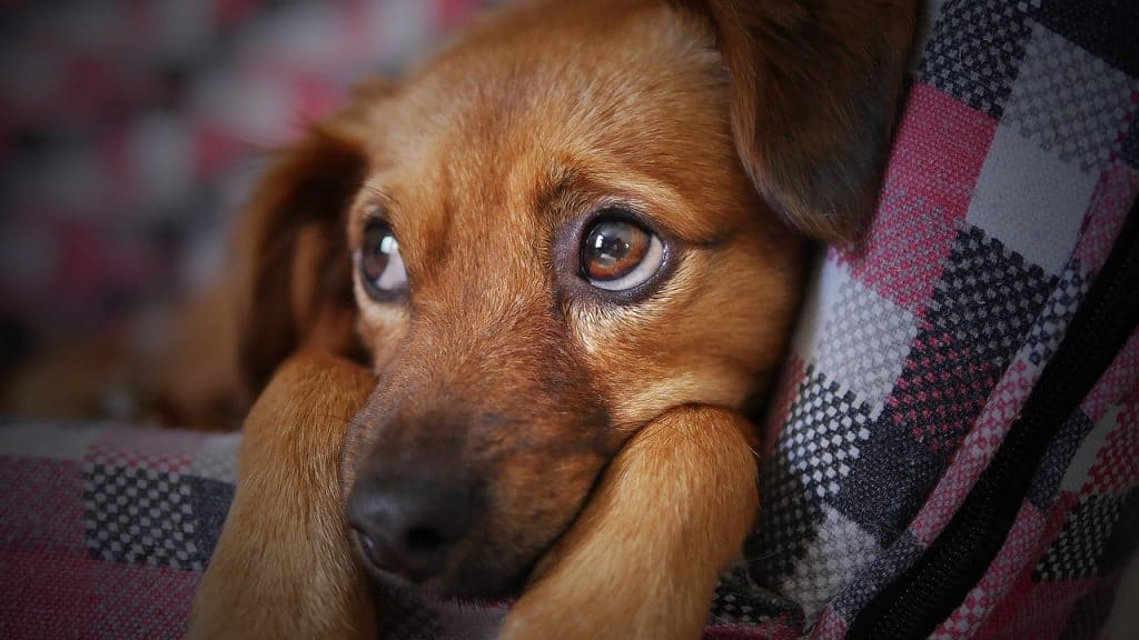 puppy crying at night