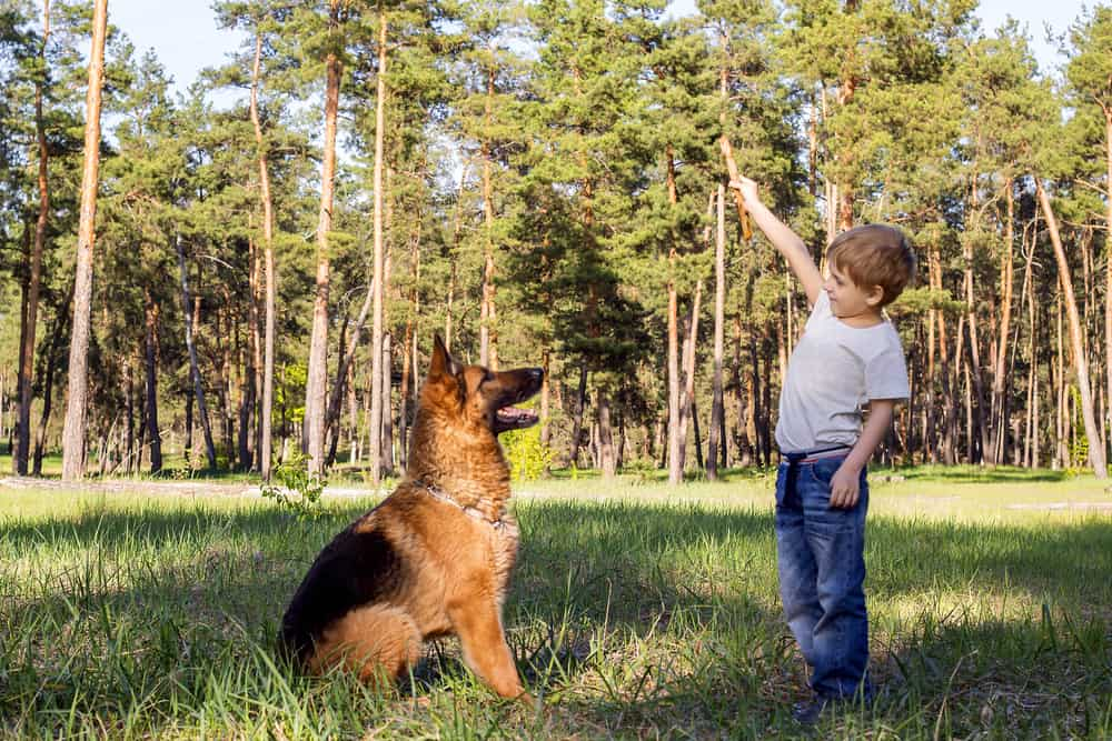 german shepherd with kid