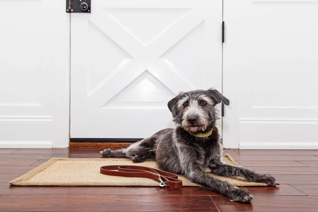 best dog door for large dogs