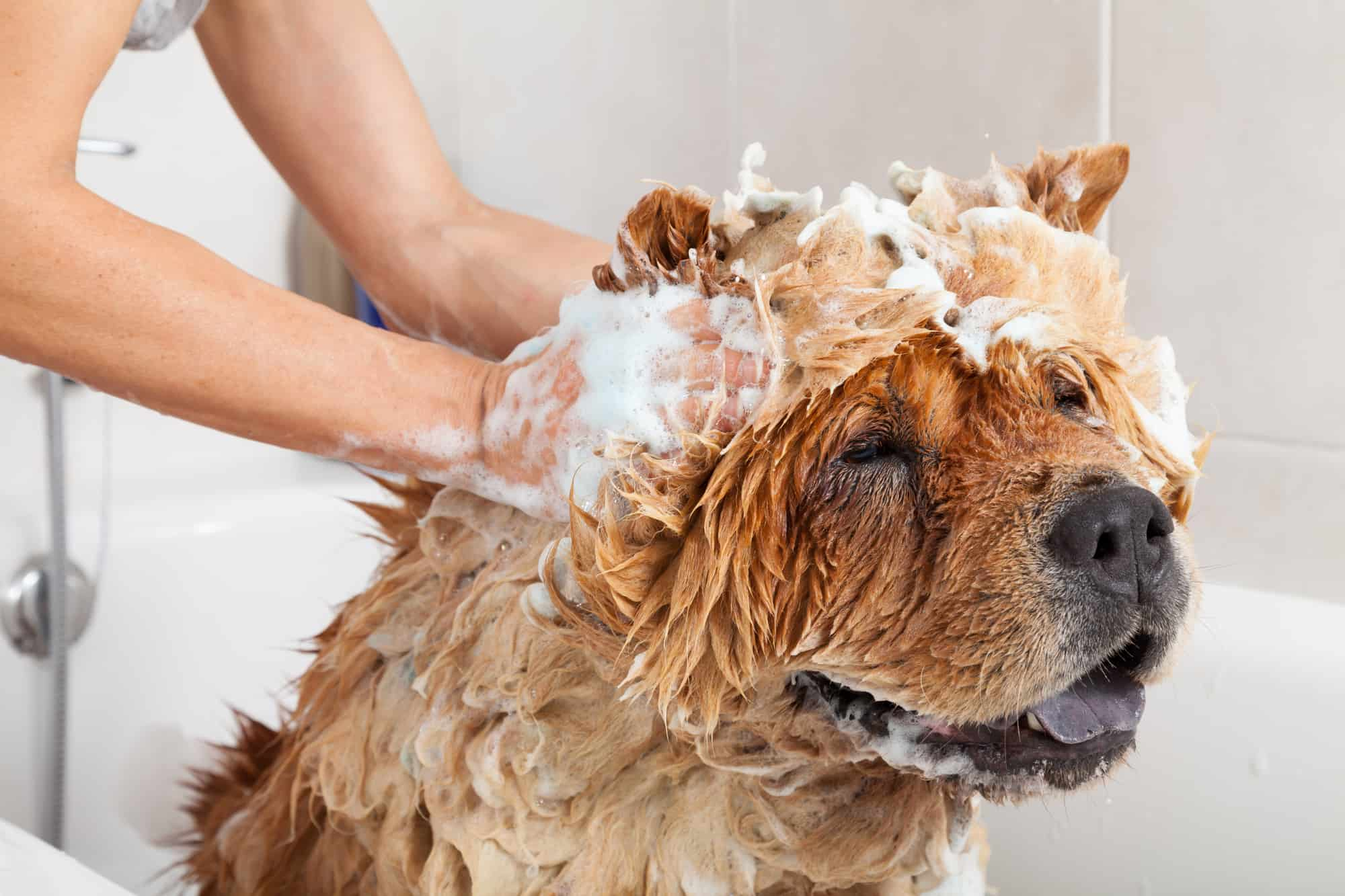 how to wash large dog at home