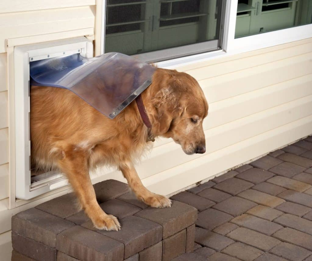 Best Dog Doors for Large Dogs