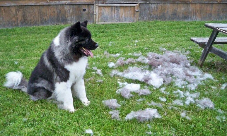 dog shedding remedies