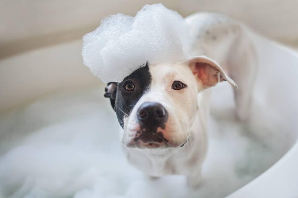 best itchy dog shampoo