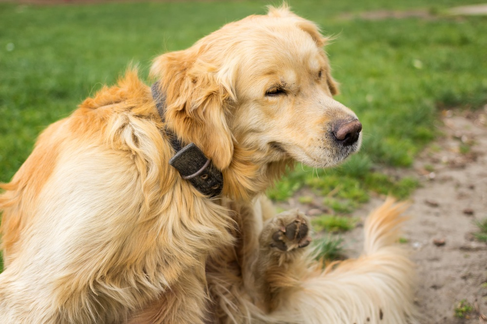 dog shampoo for itching
