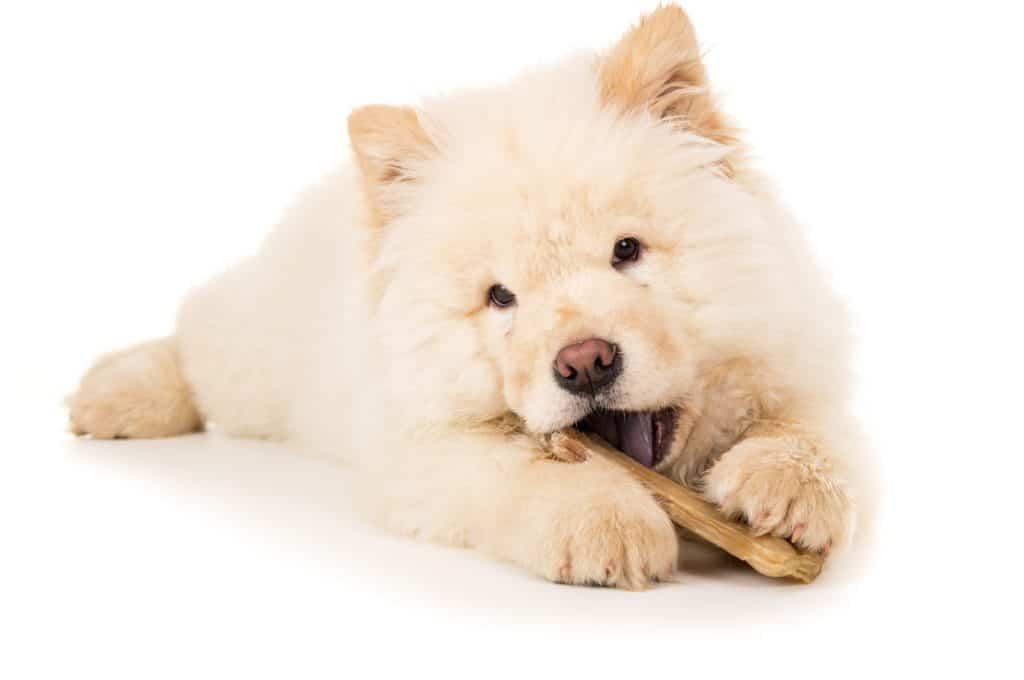 best edible dog bones