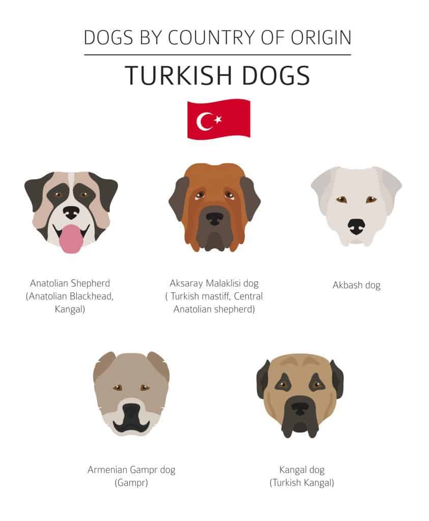 Turkish dog breeds