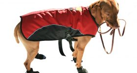 best dog boots for large dogs