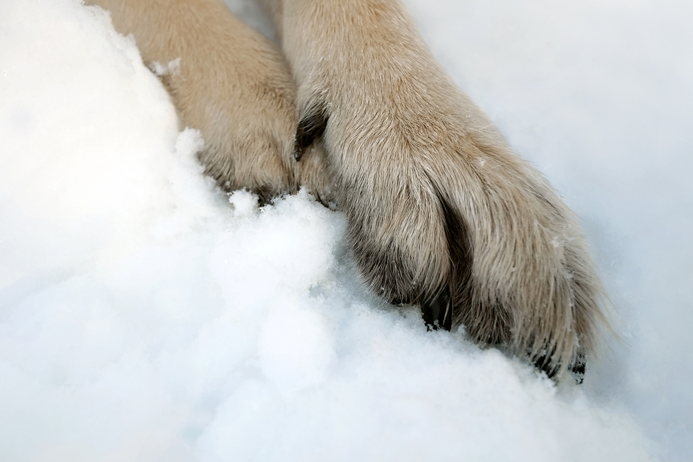 dog paw protection