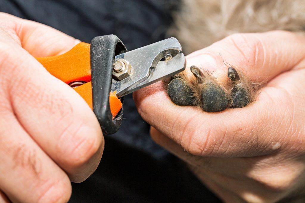 tips for protecting dog paws