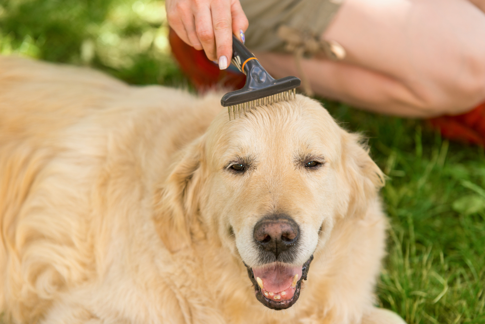 best combs for dogs