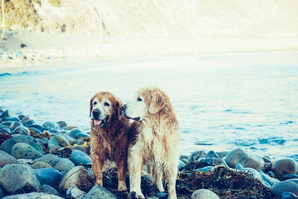best supplements for senior dogs