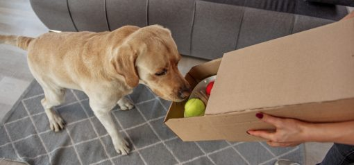 best monthly subscription boxes for big dogs