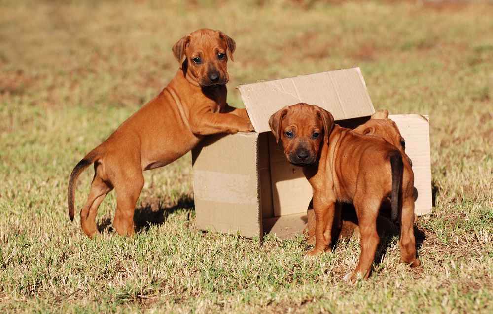 best monthly subscription boxes for large dogs
