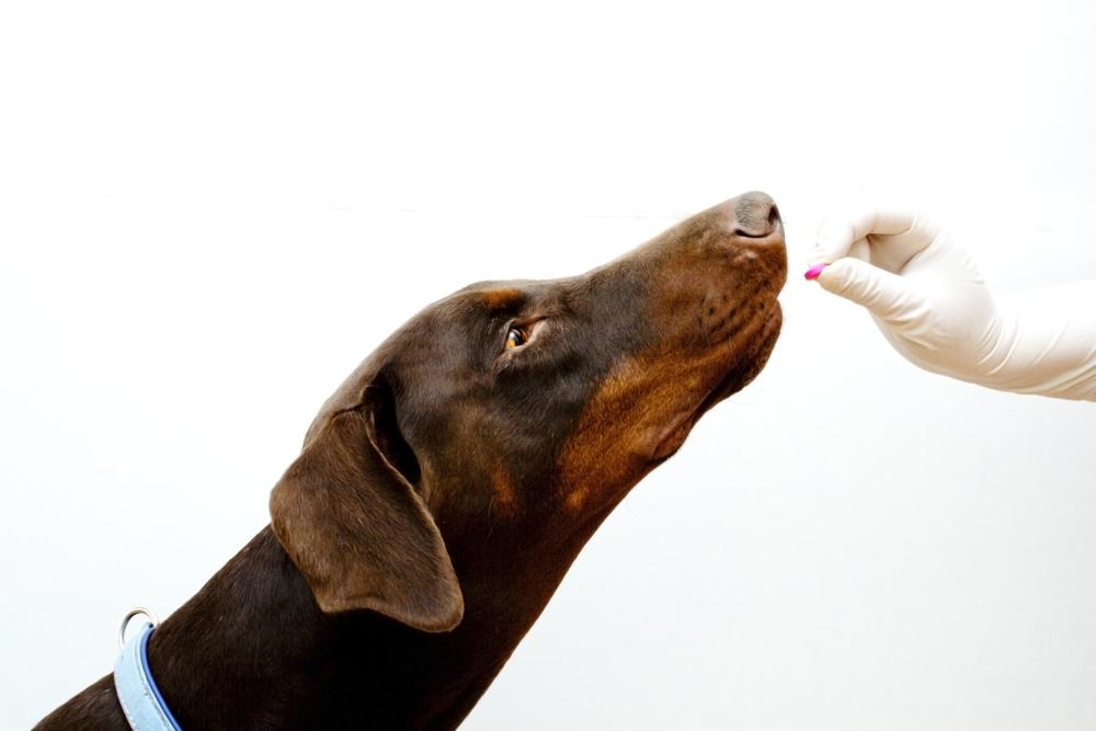 dog anxiety medication
