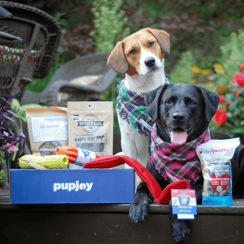 PupJoy box power chewers