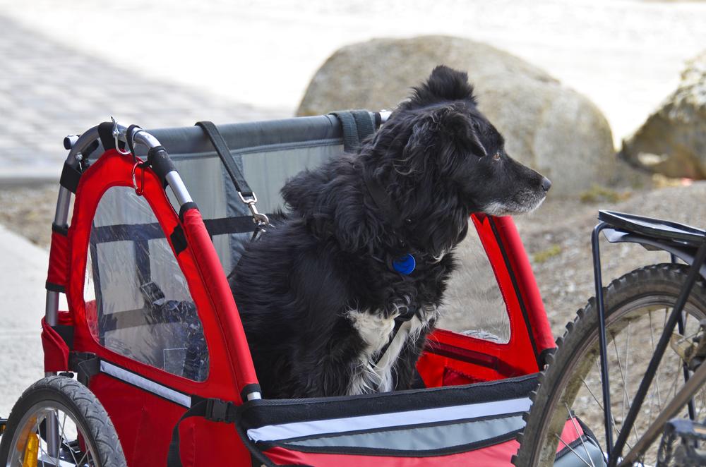 best bike trailer for large dog