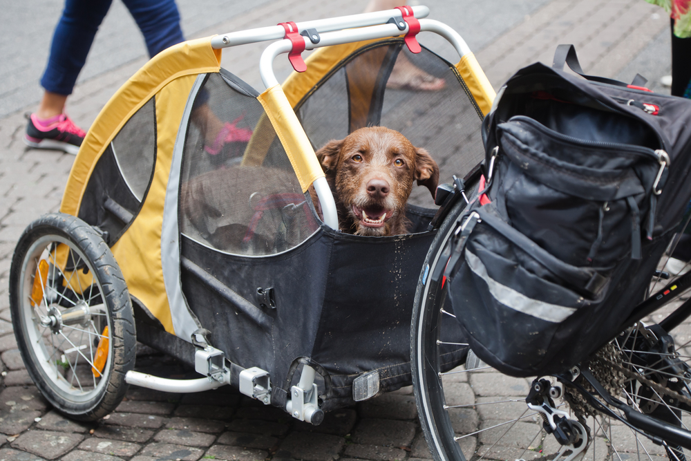 best bike trailers for dogs