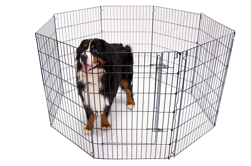 best large dog playpens