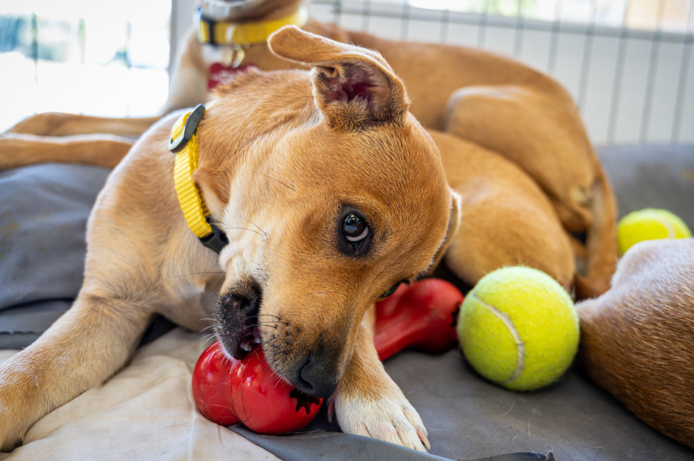 best playpen for dogs
