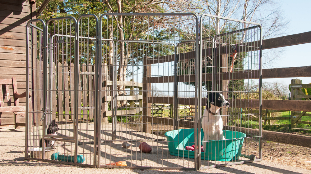 best playpen for large dogs