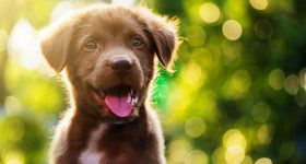 best large breed puppy food
