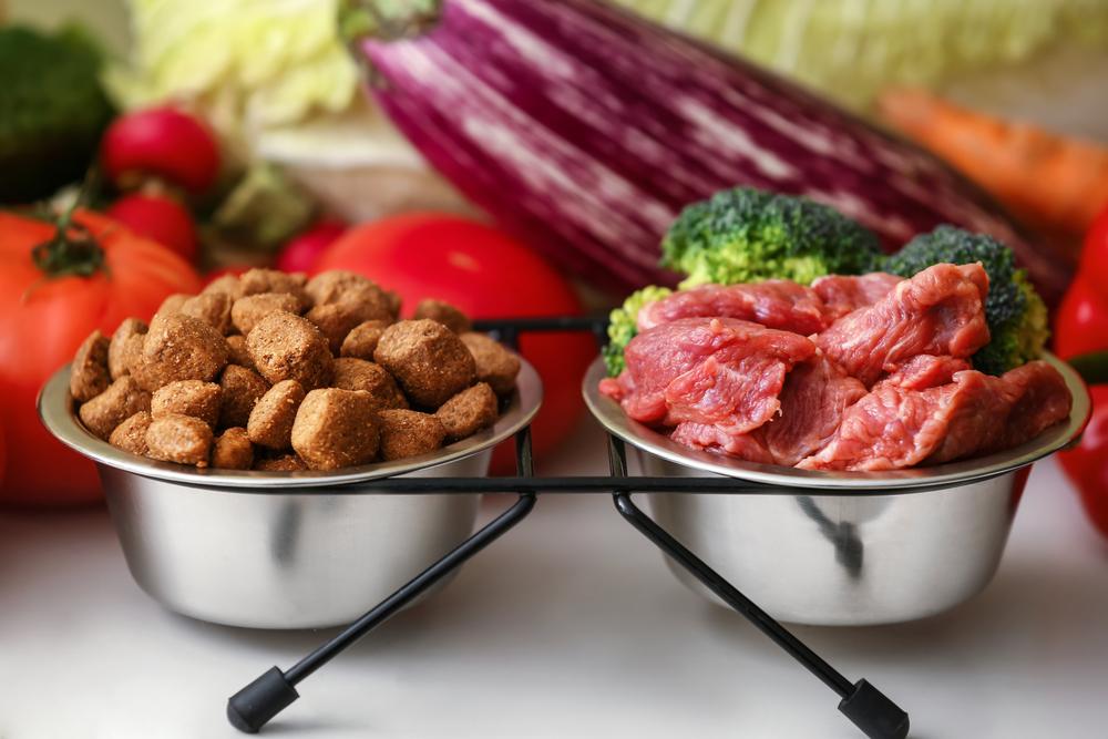 dry vs fresh dog food