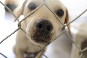 how to choose a rescue dog