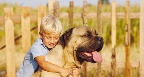 most affectionate large dog breeds