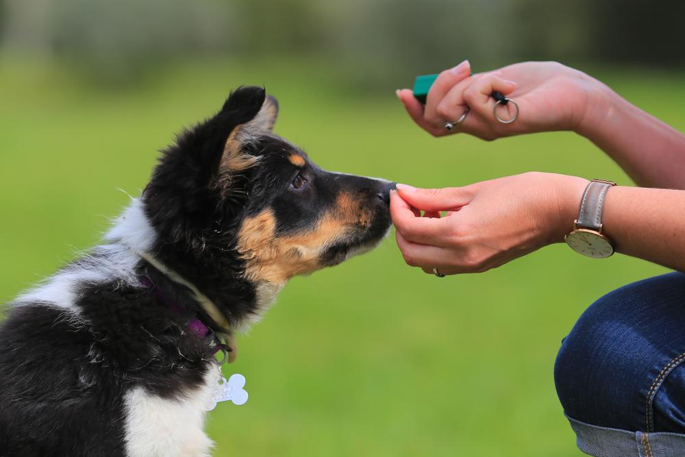 best dog training treat