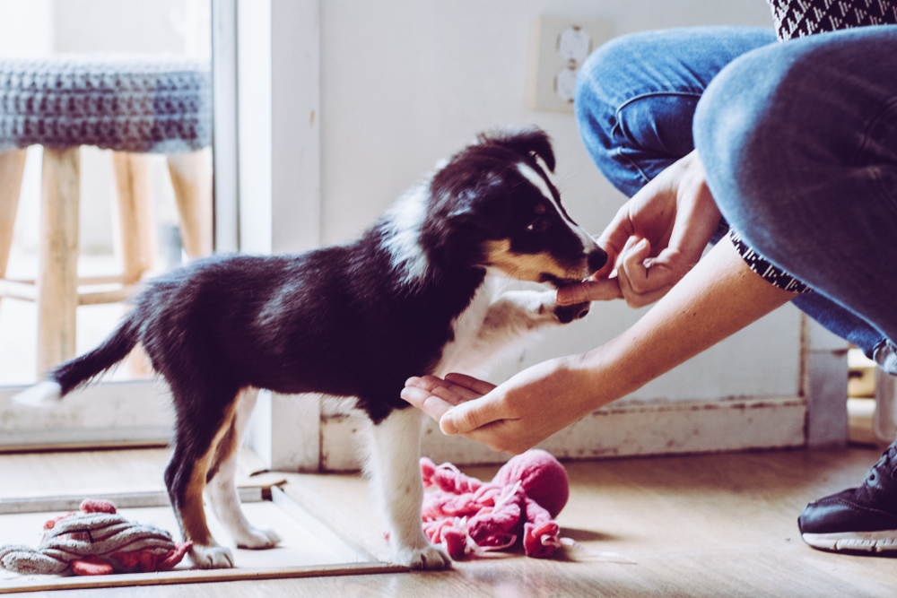 best puppy treats