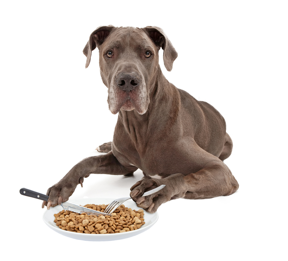 best dog food for great danes