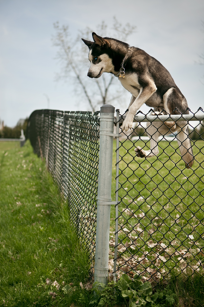 how to keep dog from jumping the fence