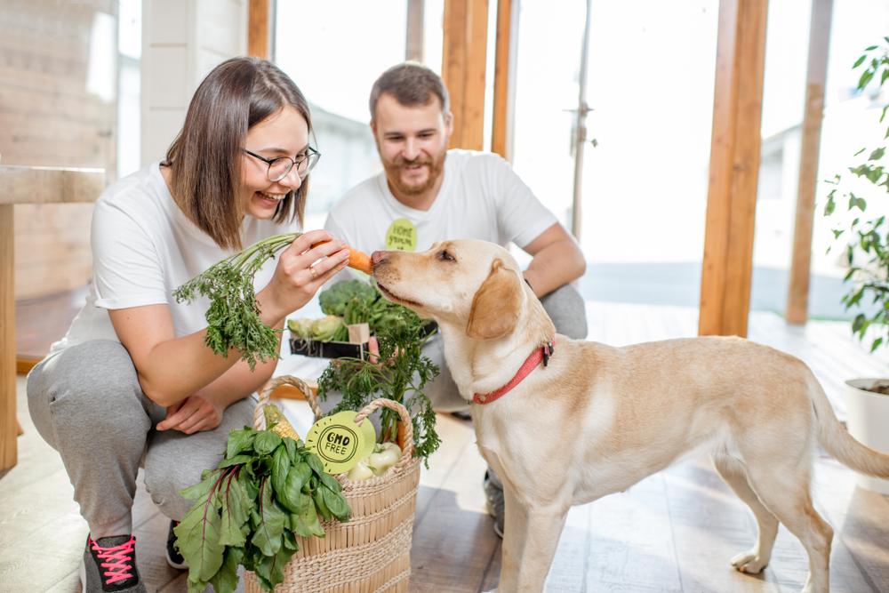 organic dog food brands