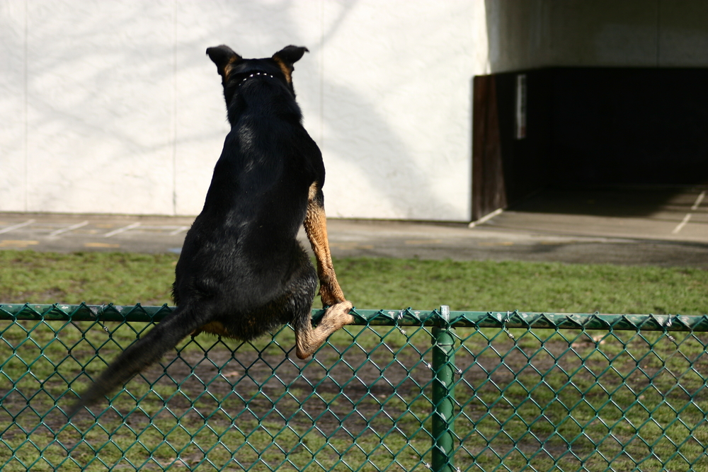 stop dog from climbing fence