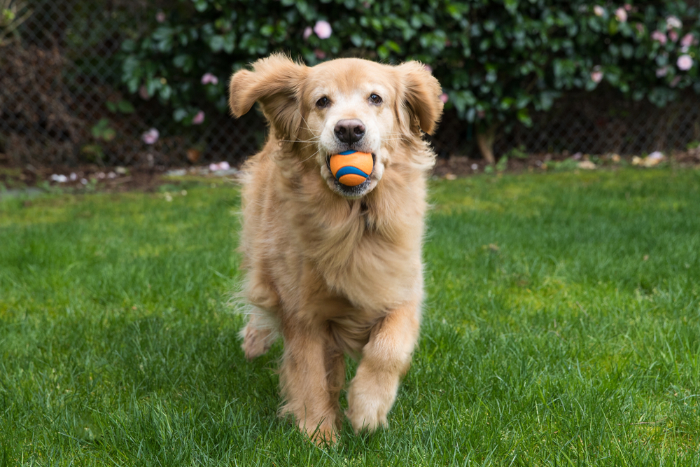 best dog ball launchers