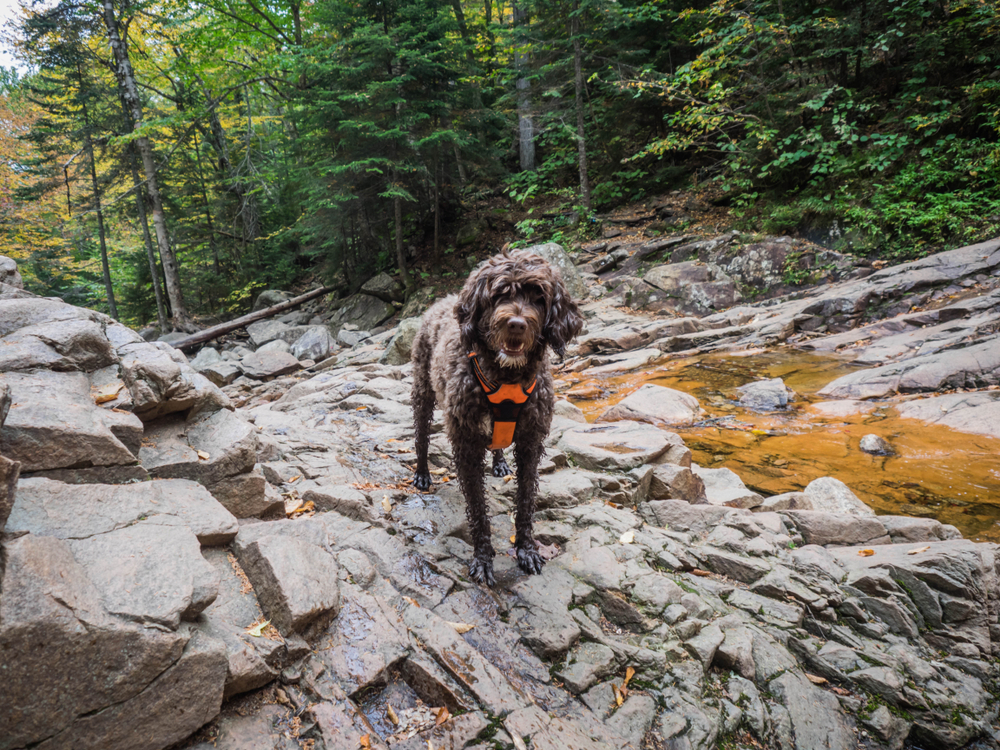 best hiking harness for dogs