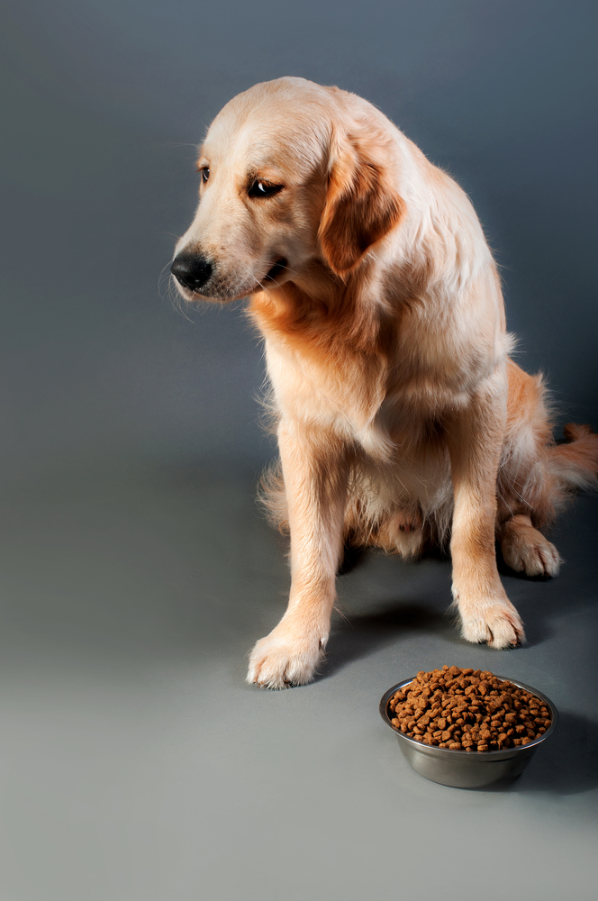 how long can dog go without food