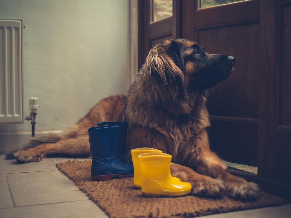 best doormat for dog