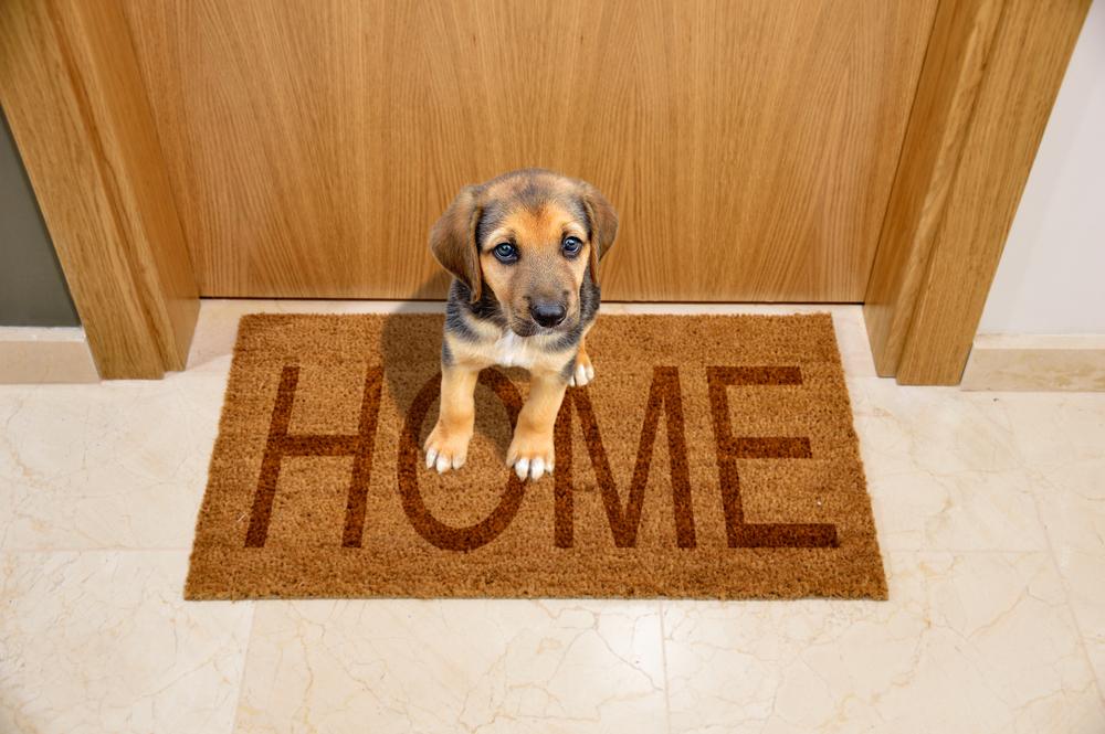 best doormats for dogs