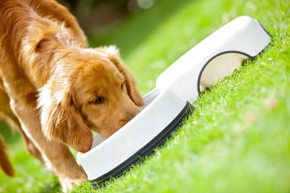 best food for a golden retriever puppy