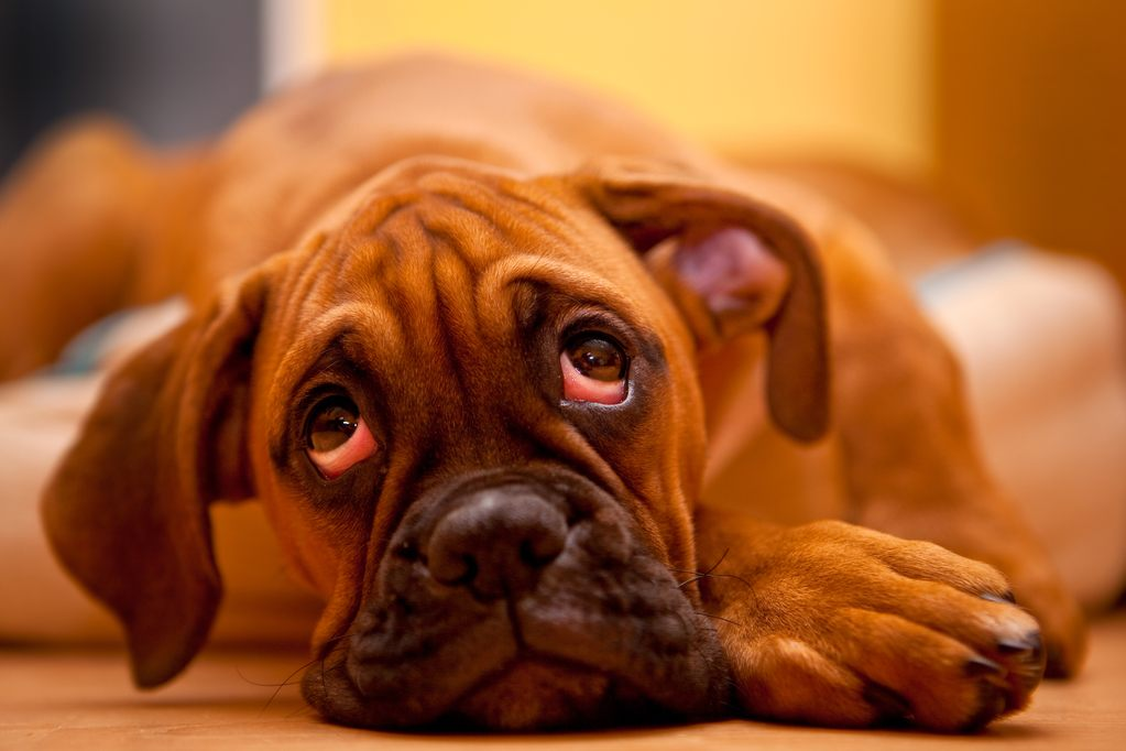 help dog gain weight