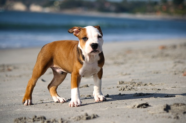 best dog food pitbull puppy