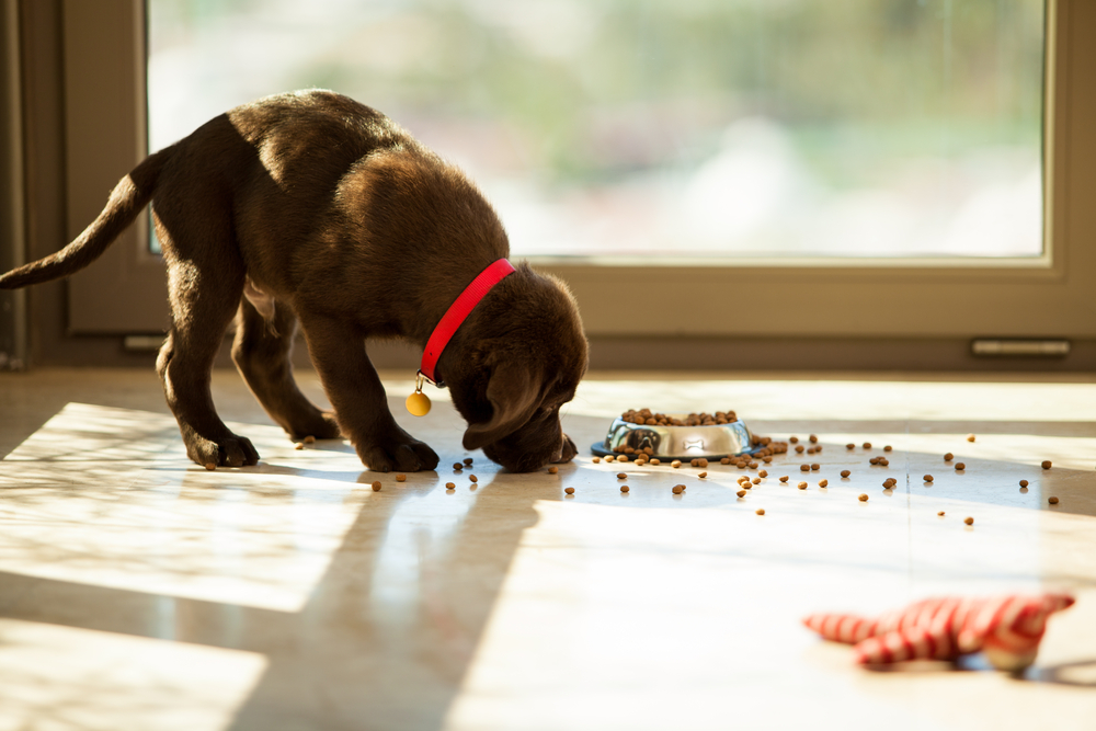 best food for lab puppies