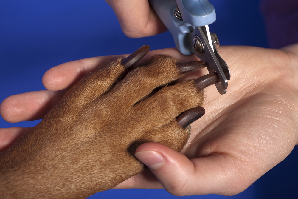 cutting dog nails