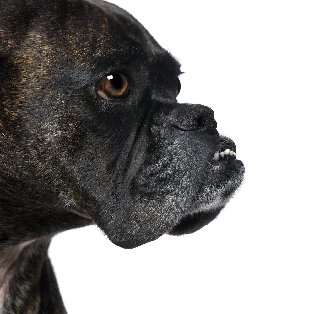 tough male dog names