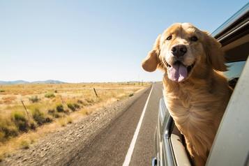 best dog travel crates