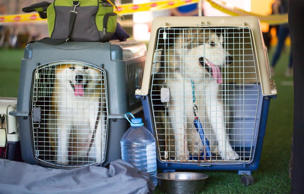 best large dog travel crates