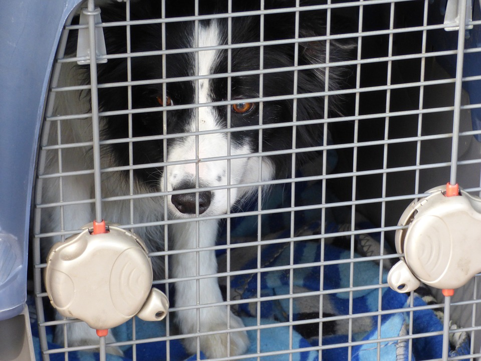 dog travel kennel