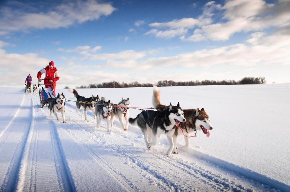 best long distance running dogs